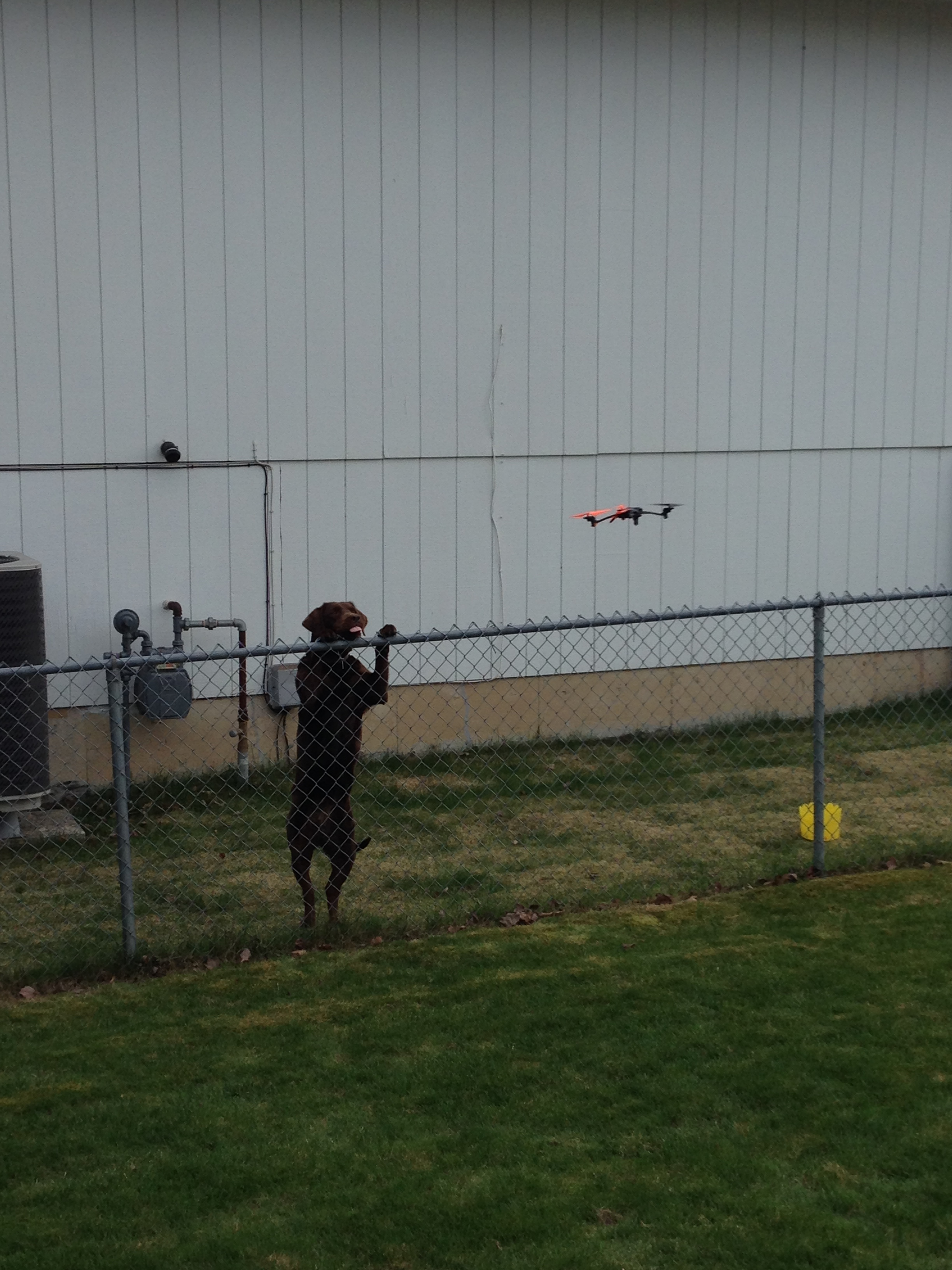 The dog, named Kokanee, went ape over the quadcopter.