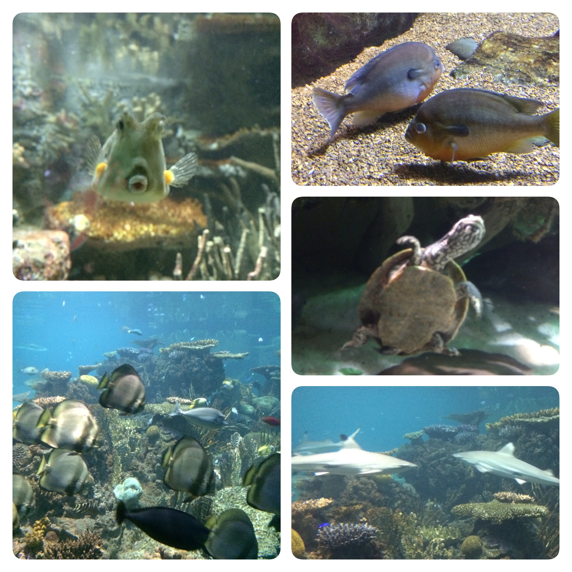 Some photos I snapped at the National Aquarium.