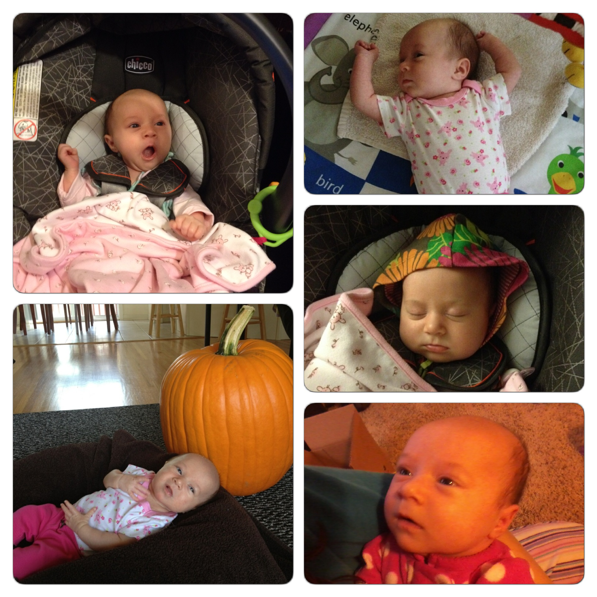 Here is this week's montage of Mikayla photos.