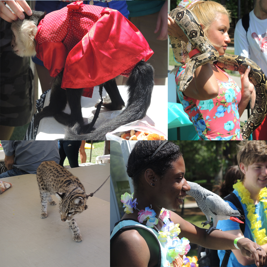 The animals were a big hit with the students at CINO Day.