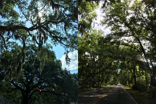 You can see the Spanish Moss dangling above in the photo I took on the left. The photo on the right that I took shows what most of the streets in Savannah look like.