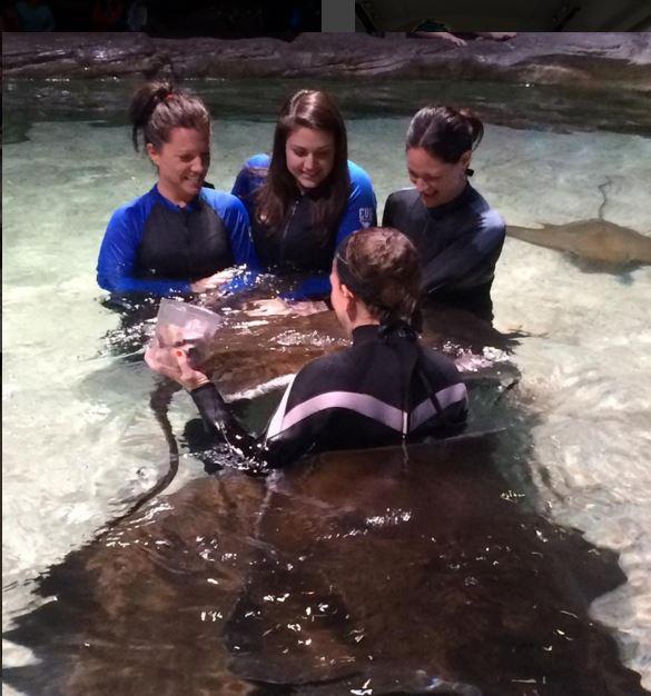 Sidney swimming with sting rays at Ripley's Aquarium last week.
