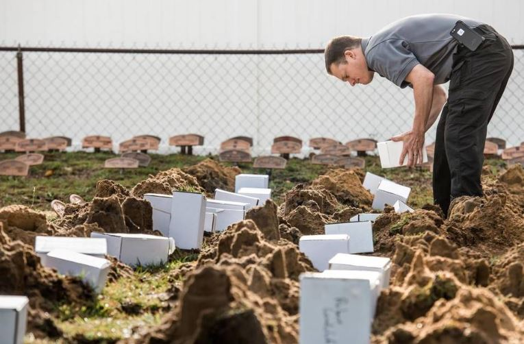 A photo of the paupers' cemetery in Columbia, S.C. (Photo courtesy of the Sun News).